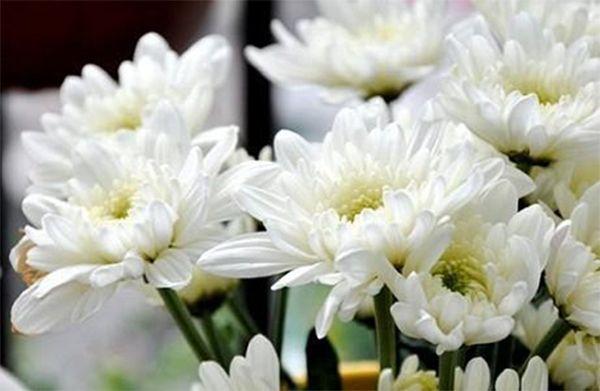 Loài hoa của sự vui vẻ, hạnh phúc