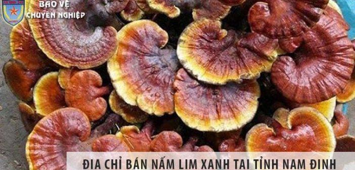 Địa chỉ bán nấm lim xanh uy tín tại tỉnh Nam Định