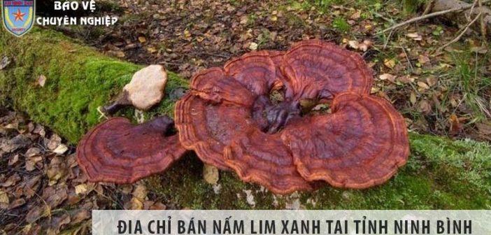 Địa chỉ bán nấm lim xanh uy tín tại tỉnh Ninh Bình