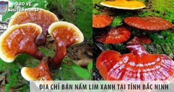 Địa chỉ bán nấm lim xanh tỉnh Bắc Ninh uy tín số 1